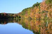 stock photo of duck pond  - Autumn