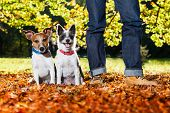 pic of dog-walker  - two happy dogs with owner sitting on grass in the park - JPG