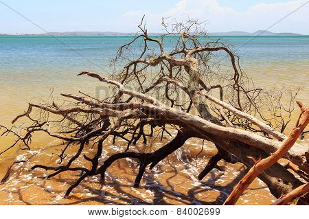 Dead Broken Tree In Waves Of Sea After Hurricane, Storm
