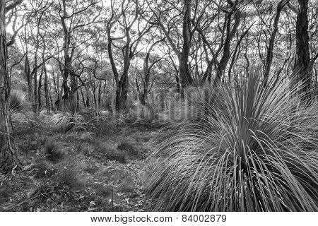 Australian Landscape Black And White