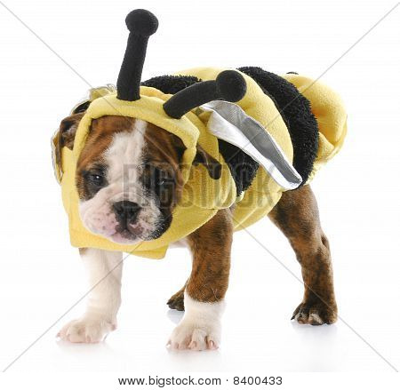 Puppy Dressed Up As A Bee