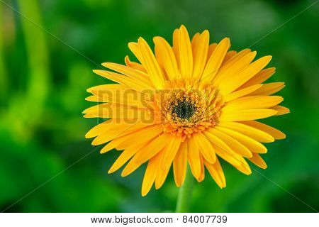 Macro View Of Yellow Flower