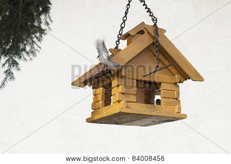 Coal Tit on a garden bird feeder, blurred background