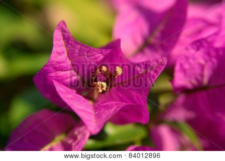 Flower  Imagination