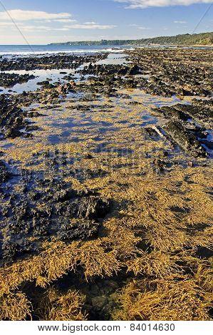 Seaweed On Rocky Beach
