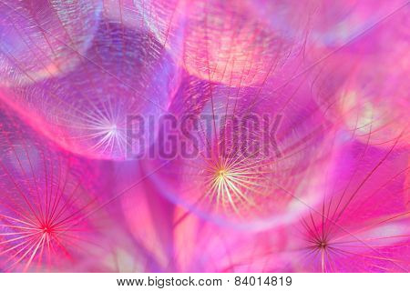 Colorful Pastel Background - Vivid Abstract Dandelion Flower