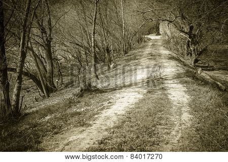 monochrome of a way through the woods with naked trees