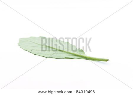 Smooth Green Leaf Jagged Upside Down