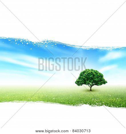 Summer, Field, Sky, Tree, Grass, Flowers