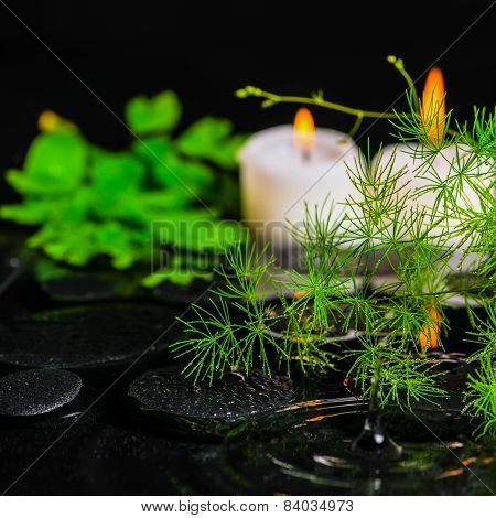 Spa Health Care Of Green Branch Asparagus, Fern And Candles On Zen Basalt Stones With Drops In Rippl