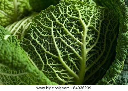 Savoy Cabbage Superfood Close Up Texture