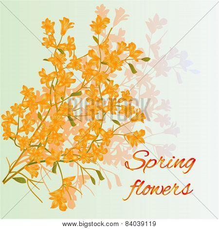 Forsythia Spring Flowers Vector