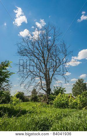 A Dead Tree.