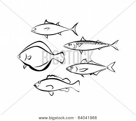 Sea Fish On White Background