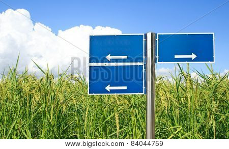Blue Traffic Sign With Green Paddy Rice Background