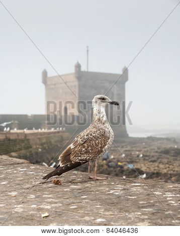 sea gull on background of the old fortress