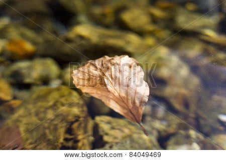 Autumn Leaf Clean Water