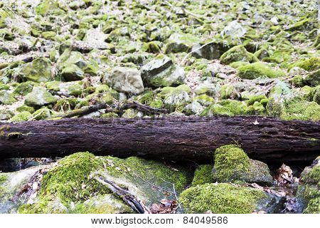 Falled Rotting Tree Mossy Rocks