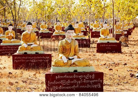 Sitting Buddha statues beneath a Bodhi tree in Monywa Myanmar.