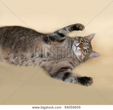 Tabby Cat Lying On Yellow