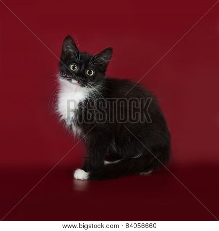 Black And White Fluffy Kitten Sitting On Burgundy
