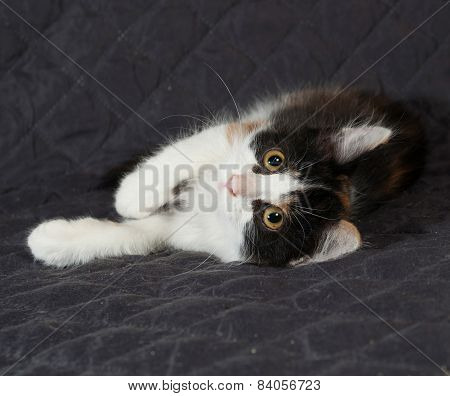 Tricolor Kitten Sitting On Quilted Bedspread