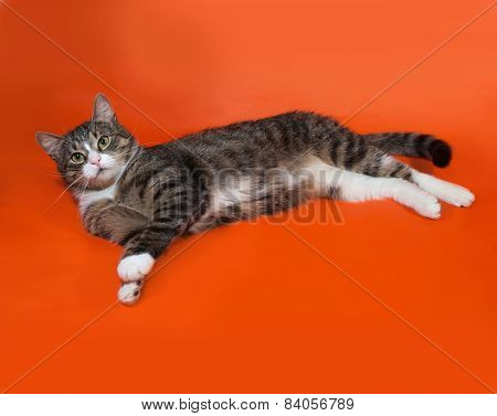 White And Striped Spotted Cat Lying On Orange