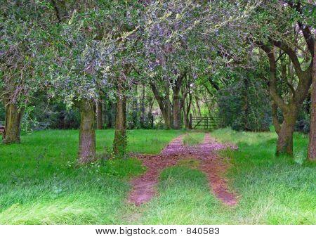 secrete path