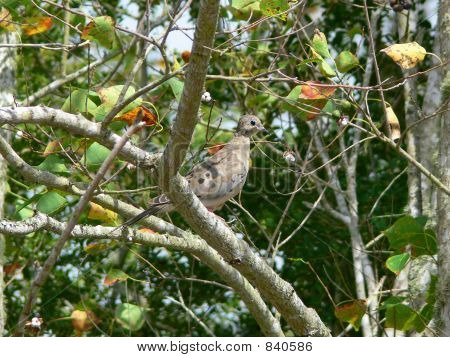 dove in the wild 2