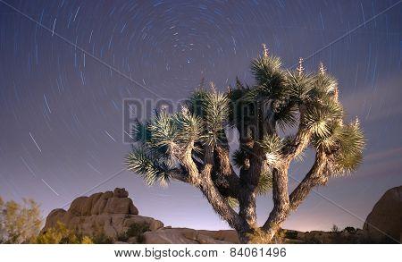North Star Trails Long Exposure Astronomy Joshua Tree Night Sky
