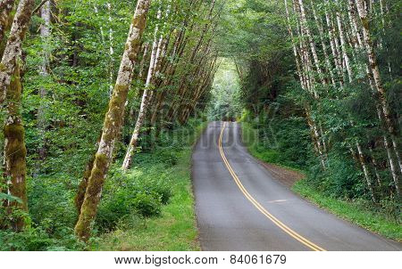 Two Lane Road Cuts Through Dense Tree Canopy Hoh Rainforest