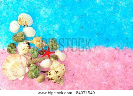 The Composition Of Sea Shells On The Pink And Blue Salt