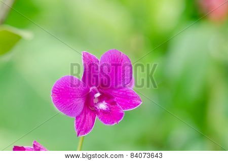 Closeup Orchids Flower