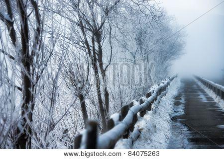Walkway To Winter Frost