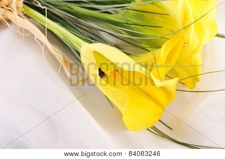 Five Yellow Calla Lilies