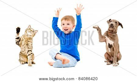 Joyful boy, cat and dog