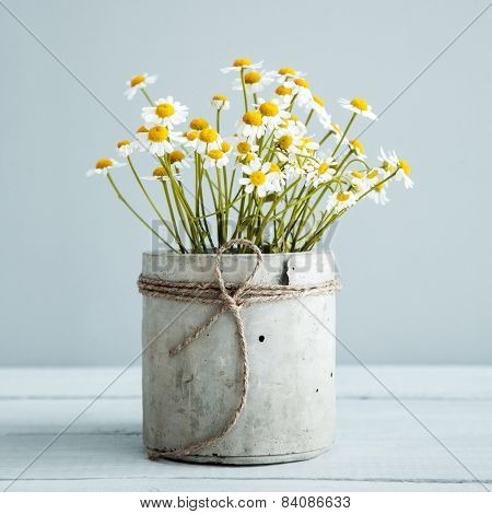 Bouquet Of Daisy-chamomile Flowers In Concrete Pot In The Morning