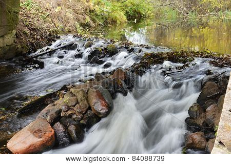 Forest's River