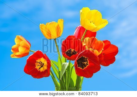 Bouquet Of Tulips On The Sky Background