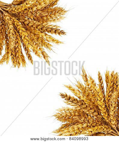 Spikelets Of Wheat On Isolated On White Background