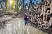 picture of lumber  - Young lumber engineer standing with notebook beside cut trunk stock