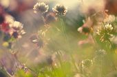 stock photo of wildflowers  - Soft macro picture of wildflowers vintage style - JPG