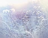 stock photo of cobweb  - Frost in meadow - JPG