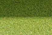 foto of grass area  - green grass with empty area for text background - JPG