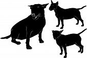 foto of minion  - animal dog pet bull terrier vector silhouette - JPG