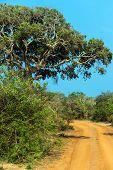 image of jungle exotic  - Exotic nature in the jungles of Sri Lanka  - JPG