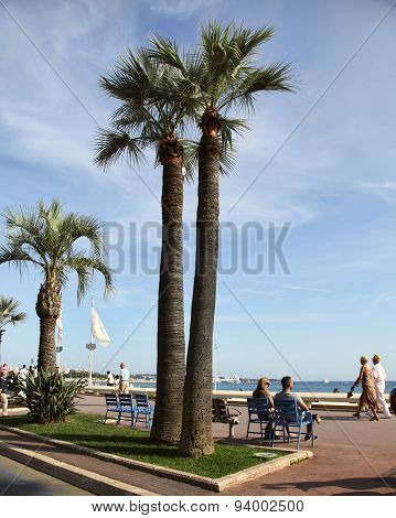 Cannes, France -  July 5, 2014. Palm Trees On The Croisette In Cannes City. Cannes Located In The Fr