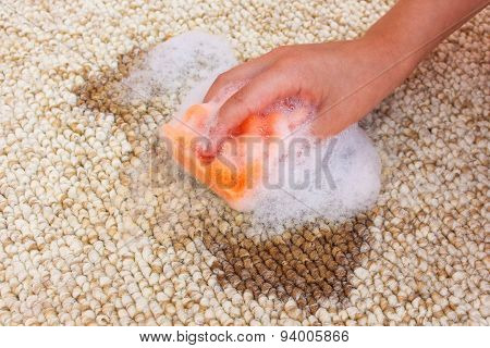Female hand cleans the carpet with a sponge and detergent. Coffee spilled on the carpet.