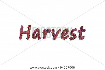 Harvest Text Flower With White Background