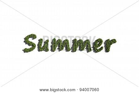 Summer Text Tree With White Background